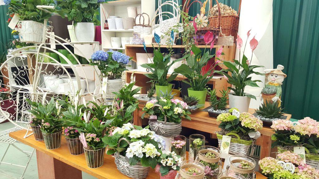 La Pergola Floristeria Almoradi Plantas para regalar 20160426_181256