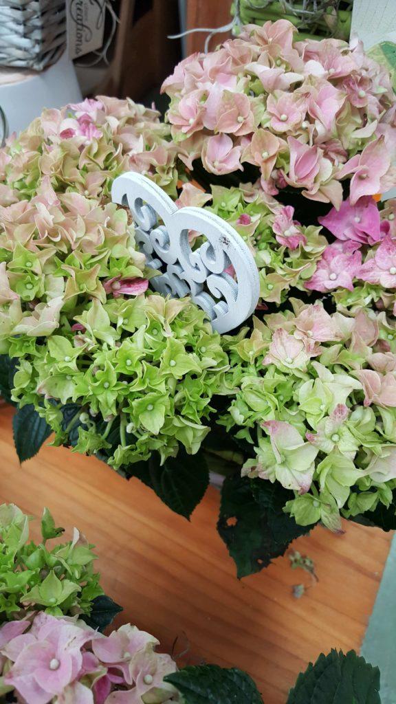 La Pergola Floristeria Almoradi Plantas para regalar 20160426_181346