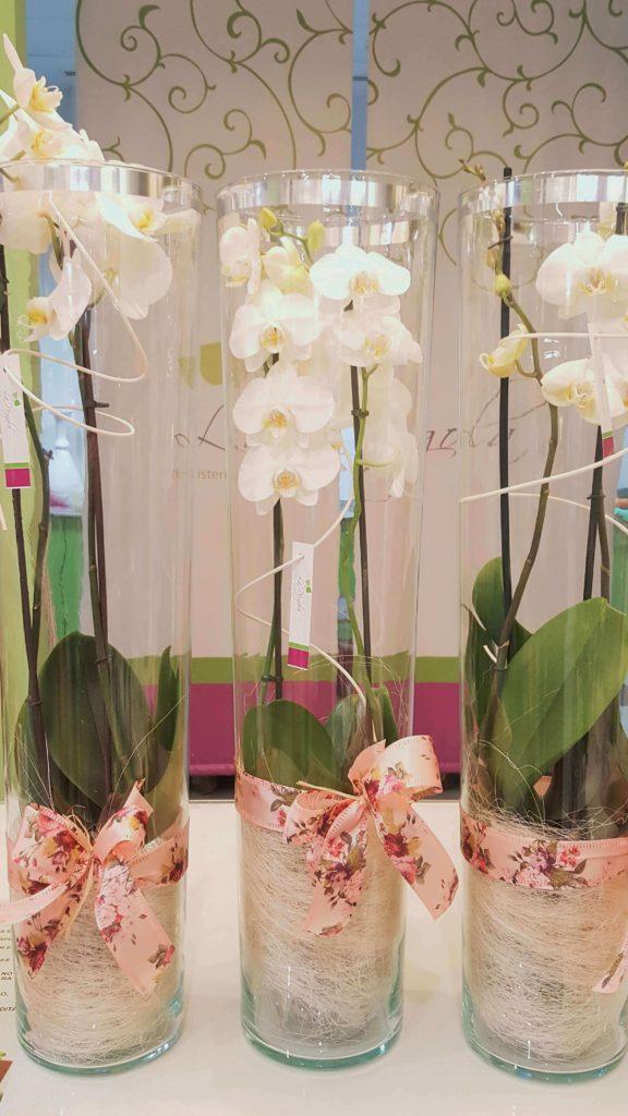 La Pergola Floristeria Almoradi Plantas para regalar 20170112_175709