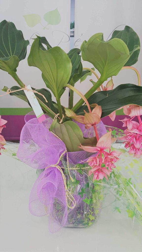 La Pergola Floristeria Almoradi Plantas para regalar 20170316_104235