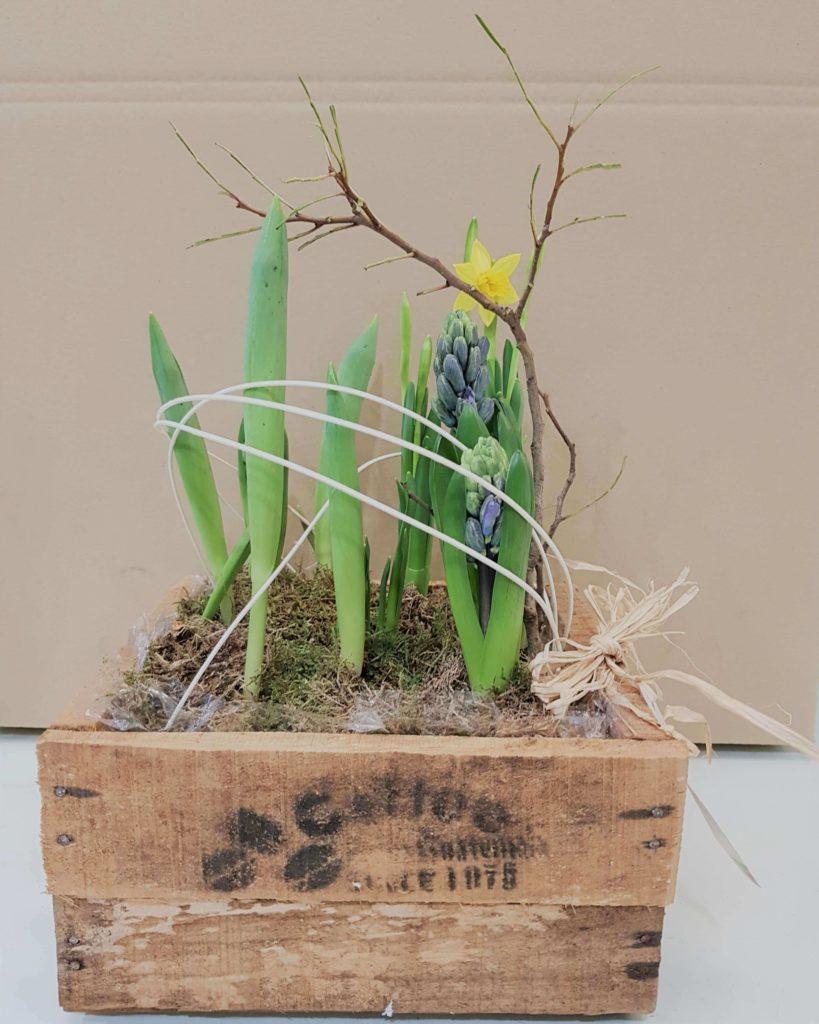 La Pergola Floristeria Almoradi Plantas para regalar 20190128_205011